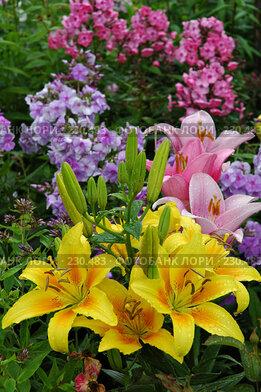 Купить «Июльский сад», фото № 230483, снято 19 июля 2006 г. (c) Ольга Дроздова / Фотобанк Лори