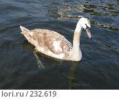 Купить «Лебедь», фото № 232619, снято 20 марта 2008 г. (c) Юлия Селезнева / Фотобанк Лори