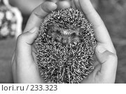 Купить «Ёжик», фото № 233323, снято 11 июля 2007 г. (c) Синицын Андрей / Фотобанк Лори