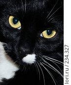 Купить «Кошка», фото № 234327, снято 18 марта 2008 г. (c) Константин Голубкин / Фотобанк Лори