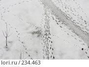 Купить «Следы на снегу», фото № 234463, снято 26 марта 2008 г. (c) Ольга Хорькова / Фотобанк Лори