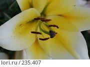 Купить «Цветы», фото № 235407, снято 4 августа 2007 г. (c) Нестерова Анна / Фотобанк Лори