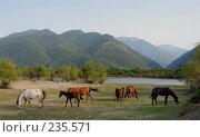 Купить «Табун лошадей пасется на фоне гор. Абхазия, Кавказ», фото № 235571, снято 28 августа 2006 г. (c) Виктор Филиппович Погонцев / Фотобанк Лори