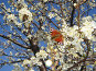 Май. Бабочка на алыче, фото № 235815, снято 16 апреля 2007 г. (c) Александр Новиков / Фотобанк Лори