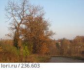 Купить «Дорога», фото № 236603, снято 26 октября 2007 г. (c) Юлия Козинец / Фотобанк Лори