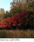 Купить «Красивая осень», эксклюзивное фото № 237415, снято 27 сентября 2007 г. (c) lana1501 / Фотобанк Лори
