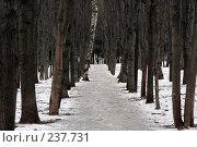 Купить «Аллея в парке», фото № 237731, снято 19 января 2008 г. (c) Антон Перегрузкин / Фотобанк Лори