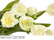 Купить «Букет белых тюльпанов, крупный план», фото № 237819, снято 8 марта 2008 г. (c) Ольга Хорькова / Фотобанк Лори