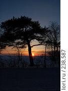 Силуэт дерева на фоне заката. Стоковое фото, фотограф Шемякин Евгений / Фотобанк Лори