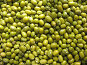 Семена мелкой фасоли (маш), фото № 239987, снято 29 марта 2008 г. (c) Заноза-Ру / Фотобанк Лори