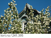 Купить «Старый деревянный дом, утопающий в цветущем жасмине по самую крышу», фото № 241395, снято 5 июля 2005 г. (c) Ольга Дроздова / Фотобанк Лори