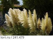 Купить «Ковыль», фото № 241479, снято 11 сентября 2006 г. (c) Олег Крицкий / Фотобанк Лори