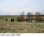 Купить «Весенний пейзаж с лошадьми», фото № 241967, снято 7 мая 2007 г. (c) Анастасия Некрасова / Фотобанк Лори