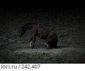 Купить «Лошадь встает», фото № 242407, снято 22 сентября 2007 г. (c) Анастасия Некрасова / Фотобанк Лори