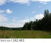 Летняя опушка, фото № 242483, снято 8 июля 2007 г. (c) Анастасия Некрасова / Фотобанк Лори