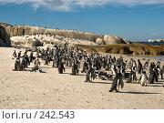 Купить «Дом африканских пингвинов», фото № 242543, снято 2 февраля 2008 г. (c) Артем Абрамян / Фотобанк Лори
