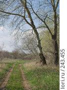 Купить «Весенний пейзаж», фото № 243455, снято 4 апреля 2008 г. (c) Федор Королевский / Фотобанк Лори