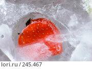 Купить «Клубника во льду, замороженная клубника», фото № 245467, снято 7 декабря 2007 г. (c) Виноградов Илья Владимирович / Фотобанк Лори