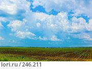 Купить «Поле и облака», фото № 246211, снято 30 июня 2007 г. (c) Валерия Потапова / Фотобанк Лори