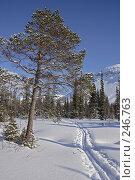 Купить «Лыжня в долине горной реки», фото № 246763, снято 25 марта 2008 г. (c) Ирина Еськина / Фотобанк Лори