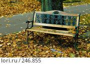 Купить «Скамейка в осеннем парке», фото № 246855, снято 27 октября 2007 г. (c) Александр Телеснюк / Фотобанк Лори