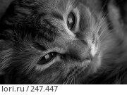 Купить «Котенок», фото № 247447, снято 2 марта 2007 г. (c) Андрей Доронченко / Фотобанк Лори