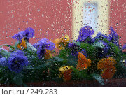 Купить «Яркие краски цветов за дождливым окном», фото № 249283, снято 12 апреля 2008 г. (c) Demyanyuk Kateryna / Фотобанк Лори