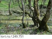 Купить «Река Баканка», фото № 249751, снято 12 апреля 2008 г. (c) Федор Королевский / Фотобанк Лори