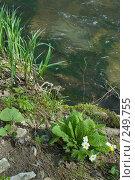 Купить «Река Баканка», фото № 249755, снято 12 апреля 2008 г. (c) Федор Королевский / Фотобанк Лори