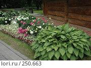 Купить «Хоста и пионы в ландшафтном дизайне», фото № 250663, снято 30 июня 2006 г. (c) Ольга Дроздова / Фотобанк Лори