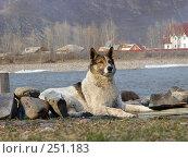 Купить «Верный пес», фото № 251183, снято 13 апреля 2008 г. (c) Валько Андрей Викторович / Фотобанк Лори