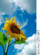 Купить «К солнышку!», фото № 251667, снято 29 июля 2005 г. (c) Ольга Дроздова / Фотобанк Лори
