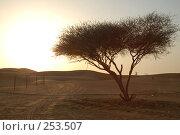 Купить «Дерево в пустыне», фото № 253507, снято 2 июня 2006 г. (c) Андрей Хохлов / Фотобанк Лори