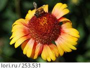 Купить «Цветок с пчелой...», фото № 253531, снято 11 июня 2007 г. (c) Минаев Сергей / Фотобанк Лори