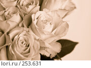 Купить «Букет роз, тонирование сепия», фото № 253631, снято 8 марта 2008 г. (c) Ольга Хорькова / Фотобанк Лори