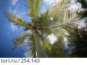 Купить «Пальма», фото № 254143, снято 9 февраля 2008 г. (c) Коваленко Ирина / Фотобанк Лори