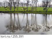 Купить «Река и луг, на котором пасутся коровы. Адыгея. Кавказ», фото № 255391, снято 6 апреля 2006 г. (c) Виктор Филиппович Погонцев / Фотобанк Лори