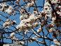 Весна, фото № 256139, снято 13 апреля 2008 г. (c) Карелин Д.А. / Фотобанк Лори