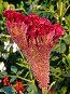 Красный цветок, фото № 256323, снято 7 августа 2007 г. (c) ДЕНЩИКОВ Александр Витальевич / Фотобанк Лори