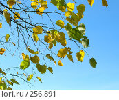 Купить «Листья», фото № 256891, снято 19 сентября 2018 г. (c) ElenArt / Фотобанк Лори