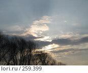 Купить «Закат над лесом», фото № 259399, снято 13 апреля 2008 г. (c) Равиль Шангараев / Фотобанк Лори