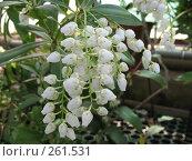 Купить «Цветение субтропического растения», фото № 261531, снято 12 апреля 2008 г. (c) Заноза-Ру / Фотобанк Лори