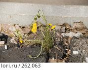 Купить «Городские цветы», фото № 262063, снято 23 апреля 2008 г. (c) Эдуард Межерицкий / Фотобанк Лори