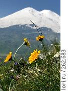 Купить «Цветы Северного Приэльбрусья», эксклюзивное фото № 262683, снято 25 июля 2007 г. (c) Оксана Гильман / Фотобанк Лори