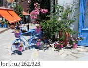 Купить «Цветы на улице», фото № 262923, снято 28 июня 2007 г. (c) Юлия Селезнева / Фотобанк Лори