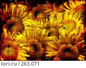 Купить «Фон с подсолнухами», иллюстрация № 263071 (c) Лукиянова Наталья / Фотобанк Лори