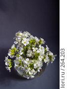 Купить «Ваза с букетом белых цветов», фото № 264203, снято 27 апреля 2008 г. (c) Биржанова Юлия / Фотобанк Лори