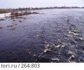 Весна на Карельской реке. Стоковое фото, фотограф Сергей Карцов / Фотобанк Лори