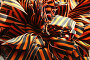 Георгиевские ленточки, фото № 265611, снято 28 апреля 2008 г. (c) Александр Секретарев / Фотобанк Лори