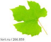 Купить «Лист винограда на белом фоне», фото № 266859, снято 1 октября 2006 г. (c) Анатолий Заводсков / Фотобанк Лори